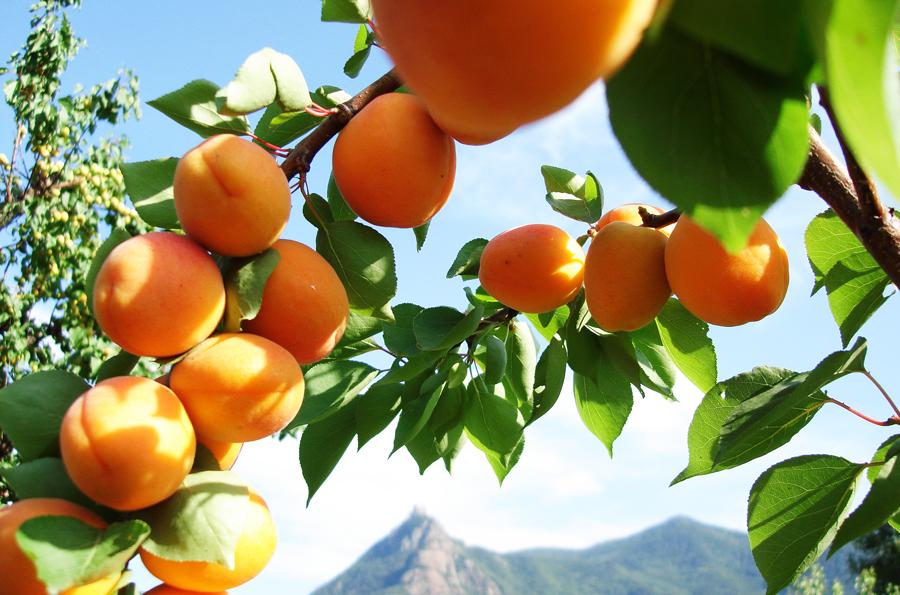 frutta 2 104