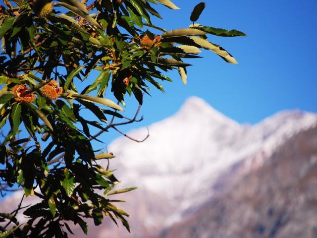Marroni della Val di Susa IGP