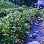piccoli frutti (4)